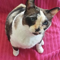 Adopt A Pet :: LeeLee - Laguna Woods, CA