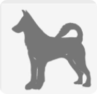 Pit Bull Terrier Mix Dog for adoption in Broken Arrow, Oklahoma - Glinda