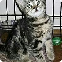 Adopt A Pet :: Sarah - Harrisburg, NC