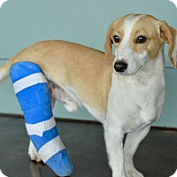 Adopt A Pet :: Hopkins - San Antonio, TX