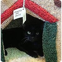 Adopt A Pet :: Miguel - Naples, FL