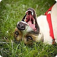Adopt A Pet :: Bingo AKA DQ - Fort Valley, GA