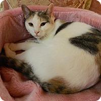 Adopt A Pet :: O'Hara - The Colony, TX