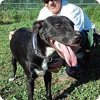 Adopt A Pet :: Jeffrey - Grantville, PA