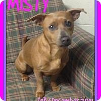 Adopt A Pet :: MISTY - Mount Royal, QC