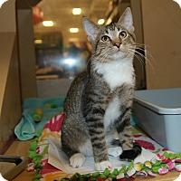 Adopt A Pet :: Reuber - Rochester, MN