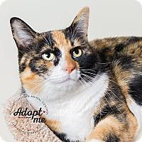 Adopt A Pet :: Tanya - Apache Junction, AZ