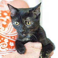 Adopt A Pet :: Riley - Knoxville, TN