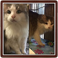 Adopt A Pet :: Monte - Baltimore, MD