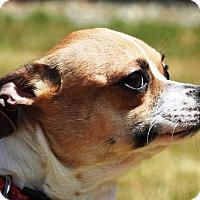 Adopt A Pet :: Avery - Portola, CA