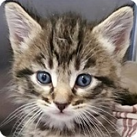 Adopt A Pet :: Jacob - Springdale, AR