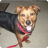 Adopt A Pet :: Rayden - Covington, KY