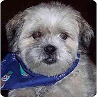 Adopt A Pet :: Java - Mays Landing, NJ