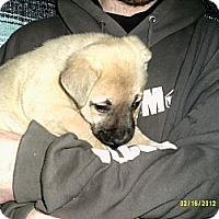 Adopt A Pet :: Lilo - Dundas, VA