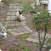 Adopt A Pet :: *Marecsa3 - Winder, GA