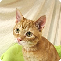 Adopt A Pet :: Cletus - Foothill Ranch, CA