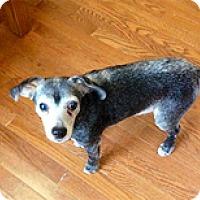 Adopt A Pet :: Onyx - Spring City, TN