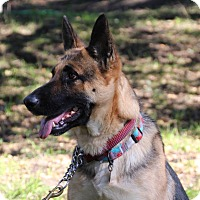 Adopt A Pet :: Katana - Walnut Creek, CA