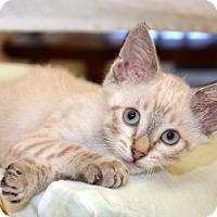 Adopt A Pet :: Bronco Billy - Davis, CA