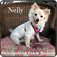 Adopt A Pet :: Nelly - Elmhurst, IL