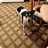 Adopt A Pet :: Chloe - North Brunswick, NJ