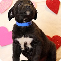 Adopt A Pet :: Hank ADOPTION PENDING - Waldorf, MD