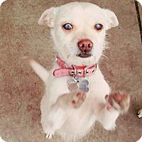 Adopt A Pet :: Valerie - Monrovia, CA