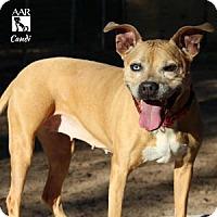 Adopt A Pet :: CANDI - Tomball, TX