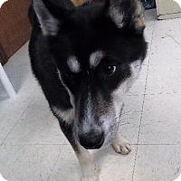 Adopt A Pet :: Misha - Van Wert, OH