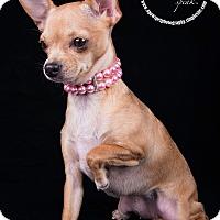 Adopt A Pet :: Bella 2 - Lodi, CA