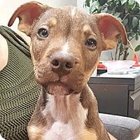 Adopt A Pet :: Feta - Oakland, CA