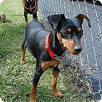 Adopt A Pet :: Asia - Nashville, TN