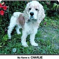 Adopt A Pet :: CHARLIE 2 - Tacoma, WA