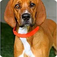 Adopt A Pet :: Maggie - Mission Viejo, CA
