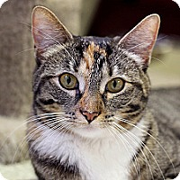 Adopt A Pet :: Margo Muffintops - Chicago, IL