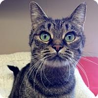 Adopt A Pet :: Mitzy - Byron Center, MI