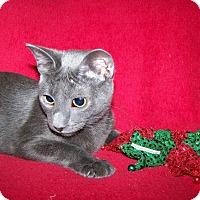 Adopt A Pet :: Bender - St. Louis, MO