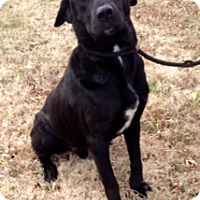 Adopt A Pet :: CHARLIE - Leland, MS