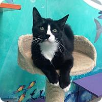 Adopt A Pet :: Ben - Newport Beach, CA