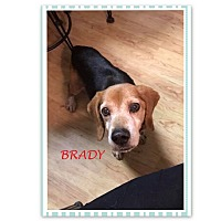 Adopt A Pet :: BRADY - Ventnor City, NJ