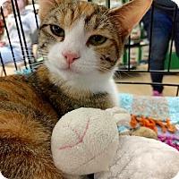 Adopt A Pet :: Spice - Maryville, TN