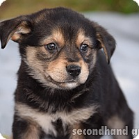 Adopt A Pet :: Pam Beesley - Rosamond, CA