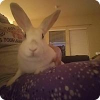 Adopt A Pet :: Jolene - San Antonio, TX