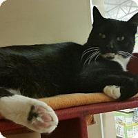 Adopt A Pet :: Nikki - Salem, NH