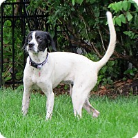 Adopt A Pet :: Teenie- Foster Home Needed - Wood Dale, IL