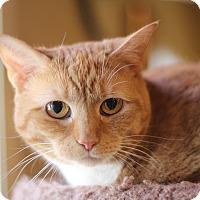 Adopt A Pet :: Riva - Richmond, VA