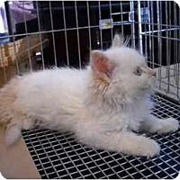 Adopt A Pet :: Izzy - Washington Terrace, UT
