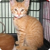 Adopt A Pet :: Sinbad - Shelton, WA