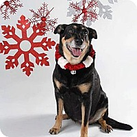 Adopt A Pet :: Angel - Surrey, BC