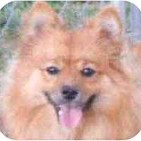 Adopt A Pet :: Sammi in KY - Chesapeake, VA